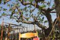 L'albero della vergogna, recensione!